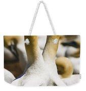 Gannets, Parc National De Weekender Tote Bag