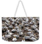 Gannets Showing Fencing Behavior Weekender Tote Bag