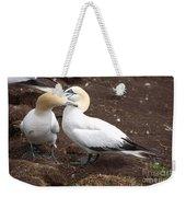 Gannets Showing Mutual Preening Behavior Weekender Tote Bag