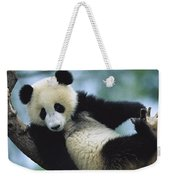 Giant Panda Cub Resting In A Tree Weekender Tote Bag