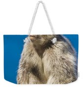 Gibraltar Barbary Macaque Macaca Weekender Tote Bag