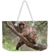 Gibraltar Barbary Macaque Weekender Tote Bag
