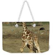 Giraffe Giraffa Camelopardalis Juvenile Weekender Tote Bag