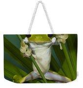 Gliding Leaf Frog Agalychnis Spurrelli Weekender Tote Bag