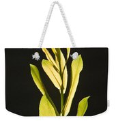 Glorious Willow Aglow Weekender Tote Bag