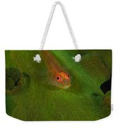 Goby On A Coral, Australia Weekender Tote Bag