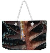 Goby On A Sea Pen, Indonesia Weekender Tote Bag