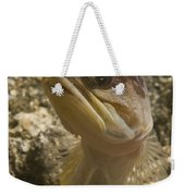 Gold-speck Jawfish Pouting, North Weekender Tote Bag