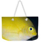 Golden Damsel Close-up, Papua New Weekender Tote Bag