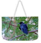 Grackle On A Branch Weekender Tote Bag