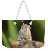Gray Bird Grasshopper Schistocerca Weekender Tote Bag