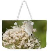 Gray Hairstreak Butterfly On Milkweed Wildflowers Weekender Tote Bag