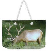 Grazing Bull Elk  Weekender Tote Bag