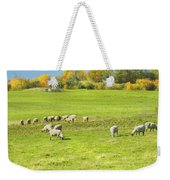 Grazing Sheep On Farm In Autumn Maine Weekender Tote Bag