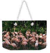 Greater Flamingo Phoenicopterus Ruber Weekender Tote Bag