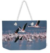 Greater Flamingos In Flight Over Lake Weekender Tote Bag