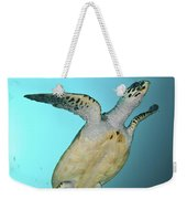 Green Turtle Swimming, Sabah, Malaysia Weekender Tote Bag