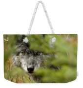 Grey Wolf, Outside Golden, British Weekender Tote Bag