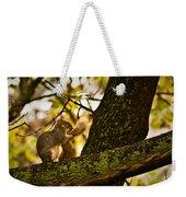Grooming Grey Squirrel Weekender Tote Bag