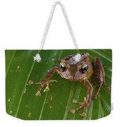 Ground Frog Nakanai Mts Papua New Guinea Weekender Tote Bag