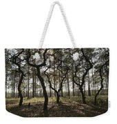 Grove Of Trees In The Ocala National Weekender Tote Bag