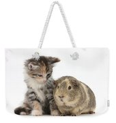 Guinea Pig And Maine Coon-cross Kitten Weekender Tote Bag