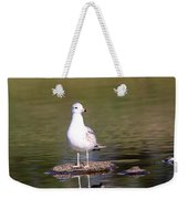 Gull - Don't Get Wet Feet Weekender Tote Bag