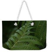 Hapuu Pulu Hawaiian Tree Fern - Cibotium Splendens Weekender Tote Bag