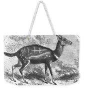 Harnessed Antelope Weekender Tote Bag