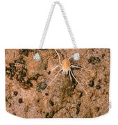 Harvestman Crosbyella Sp. In Cave Weekender Tote Bag