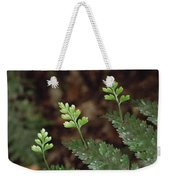 Hen And Chicken Fern Asplenium Weekender Tote Bag