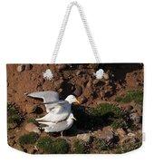 Herring Gulls Mating Weekender Tote Bag