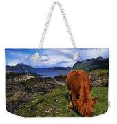 Highland Cattle, Scotland Weekender Tote Bag
