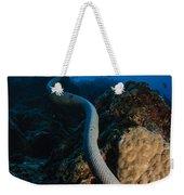 Highly Venomous Olive Sea Snake Weekender Tote Bag