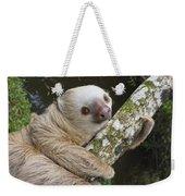 Hoffmanns Two-toed Sloth Costa Rica Weekender Tote Bag by Suzi Eszterhas