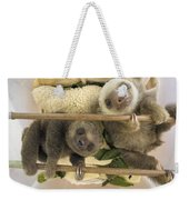 Hoffmanns Two-toed Sloth Orphaned Babies Weekender Tote Bag by Suzi Eszterhas