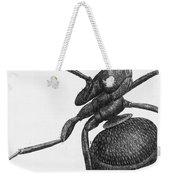 Hooke: Ant, 1665 Weekender Tote Bag