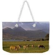 Horses Grazing, Macgillycuddys Reeks Weekender Tote Bag