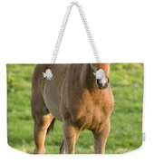 Horses In Field Near Ballyvaloo Weekender Tote Bag