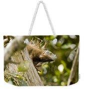 Iguana In Tree Weekender Tote Bag