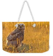 Immature Great Horned Owl Backlit Weekender Tote Bag