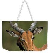 Impala Aepyceros Melampus Buck Africa Weekender Tote Bag