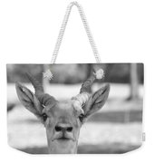 Impala -black And White Weekender Tote Bag