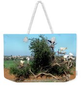 In Morocco Goats Grow On Trees Weekender Tote Bag