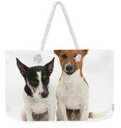 Jack Russell Terrier Dog, Rockie Weekender Tote Bag