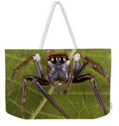 Jumping Spider Papua New Guinea Weekender Tote Bag by Piotr Naskrecki