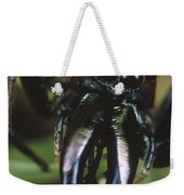 Jumping Spider Portrait, Queensland Weekender Tote Bag