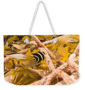 Juvenile French Angelfish Among French Weekender Tote Bag