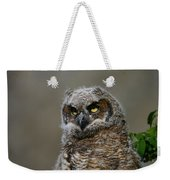 Juvenile Great Horned Owl Weekender Tote Bag