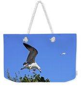 Juvenile Herring Gull Weekender Tote Bag